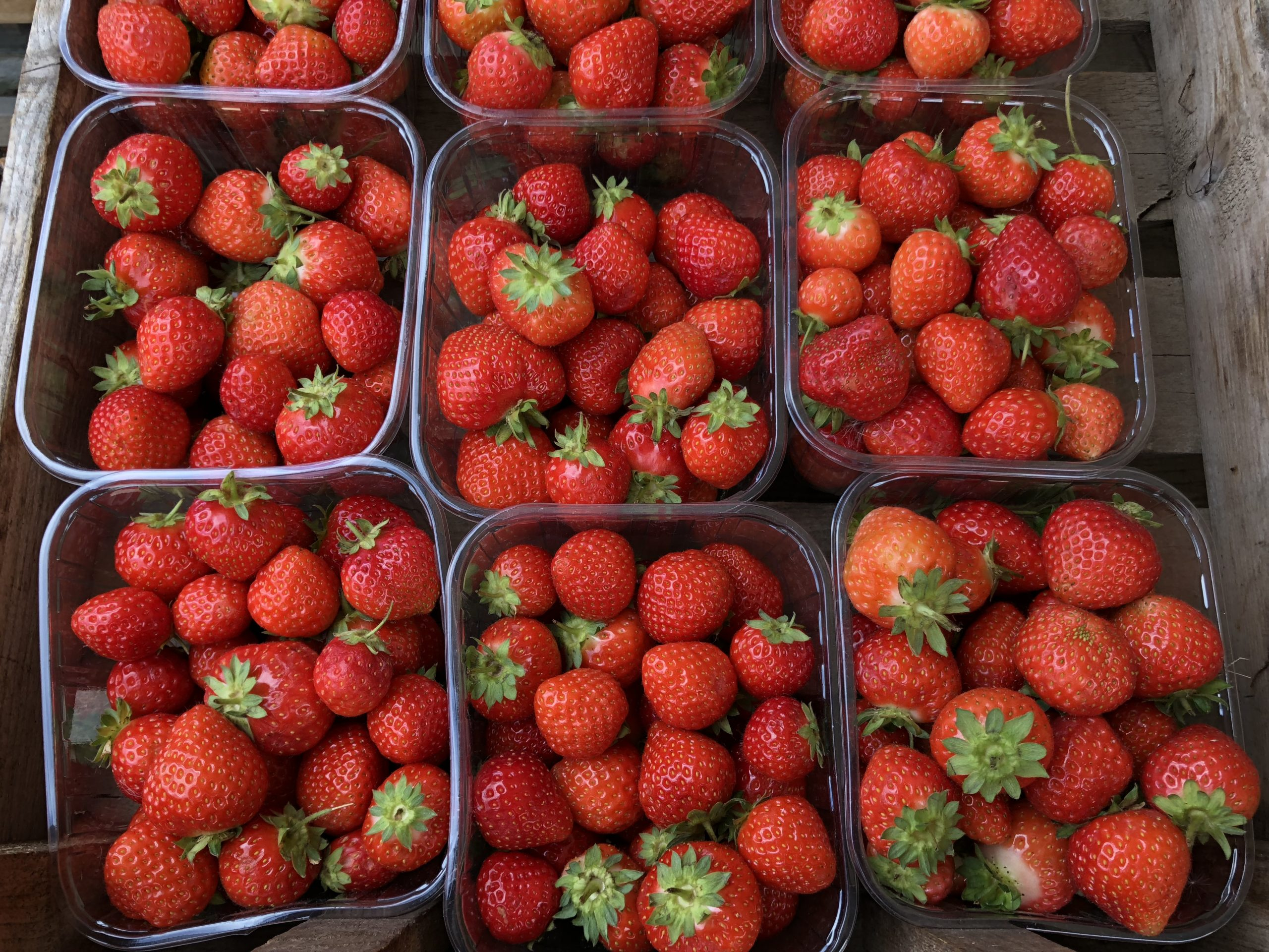Punnets of ripe strawberries